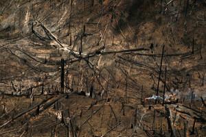 Deforestación en el estado Amazonas - Venezuela