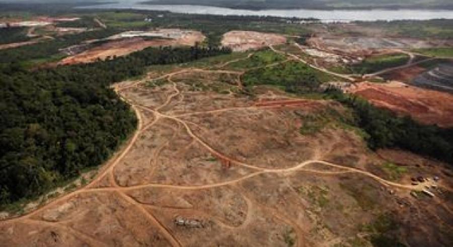 Nuestro privilegiado país cerca de la mitad se encuentra cubierto de bosques. El 80 % se encuentra al sur del Orinoco. En la mitad norte del país, con el 90% de la población venezolana, los bosques cubren apenas el 20% de la superficie. Se encuentran además fraccionados, intervenidos y severamente degradados. Se estima que cerca de dos tercios de la superficie forestal original de Venezuela al Norte del Orinoco ya ha sido destruida.